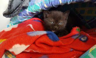 Dringend Pflegestelle für Katzenbabyaufzucht gesucht