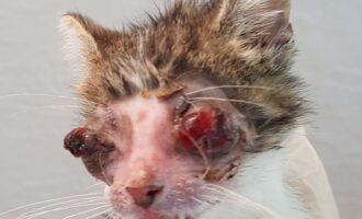 Schreckliches Katzenleid in Rössing