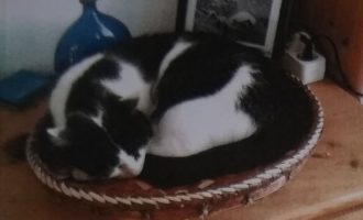 Vermisst – Kater Minka aus der Michelswiese