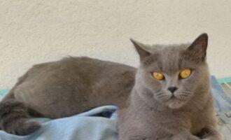 Vermisst – Katze Tinka aus Hildesheim