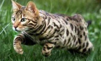 Vermisst – Katze Dori aus Hohenhameln