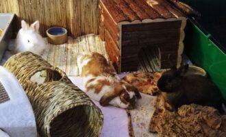 Neues Zuhause – Popeye und Kleinaa grüßen