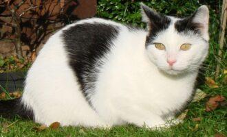 Vermisst – Katze Molly aus dem Hildesheimer Wald