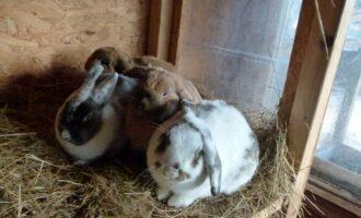 Neues Zuhause – Ole, Lasse, Tamme und Pelle grüßen