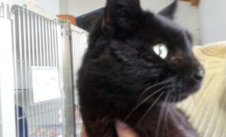 Zugelaufen – schwarze Katze bei der Jet Tankstelle
