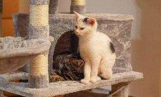 Neues Zuhause – Katzen Angel (Falco) und Devil grüßen