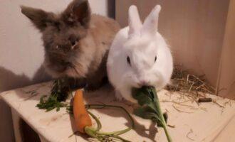 Neues Zuhause – Kaninchen Keks und Merlin