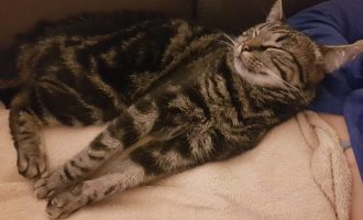 Neues Zuhause – Katze Luna