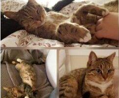 Vermisst – Katze Miley aus Hildesheim