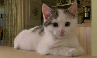 Neues Zuhause – Katzenkinder Sunny und Lissy grüßen