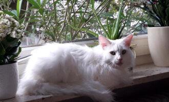 Neues Zuhause – Katze Nana