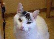 Neues Zuhause – Katze Whiskey grüßt
