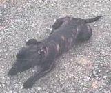 Vermisst – Hund Paco nach Autounfall entlaufen