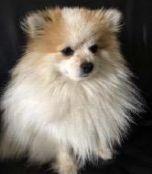 Vermisst – Hund Loui aus 90610 Winkelhaid