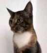 Vermisst – Katze Maya aus Sarstedt