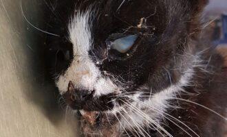 Zugelaufen – Tote Katze am Rewe in Holle gefunden