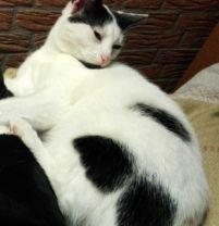 Vermisst – Katze Bella aus Sehnde