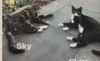 Vermisst – Katze Skitty und Kater Sky