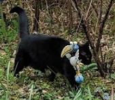 Vermisst – Katze Venus aus der Steinbergstrasse