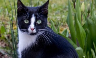 Neues Zuhause – Katze Cleo grüßt herzlich