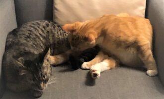 Neues Zuhause – Samtpfoten Musial (jetzt Dexter) und Mr. Tom grüßen herzlich