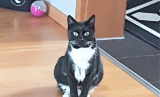 Neues Zuhause – Katze Hilde (ehem. Amelie) grüßt