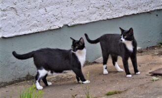 Neues Zuhause – Katzen Skipper und Bounty (Joko und Claas) grüßen