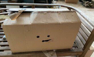 Zugelaufen – 2 in Karton ausgesetzte Katzen in Sillium