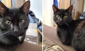 Vermisst – Katze Lilly aus Asel