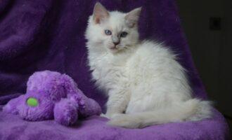 Vermisst – Katze Djena aus Hildesheim