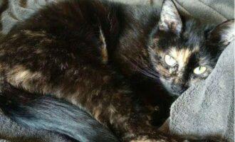 Vermisst  – Katze Enki aus Elze